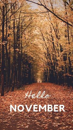 Fall Wallpaper for Your Phone - The Keele Deal Hello November wallpaper to start of the month of Nov Welcome November, Hello November, Happy November, Wallpaper For Your Phone, Iphone Background Wallpaper, Iphone Wallpaper Herbst, November Images, November Quotes, Holidays Events