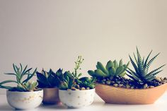 tuTORIal: DIY Succulent Planter
