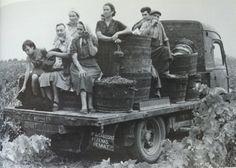 vintage harvest picture.
