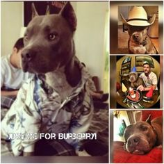 Justice For Burberry! Destroyed By A Police Officer After Hi... - Care2 News Network