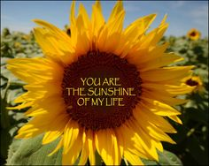 Beautiful Flower Quotes, Beautiful Verses, Beautiful Lines, You Are Beautiful, Sunflower Quotes, Sunflower Pictures, Sunflower Art, Good Day Sunshine, You Are My Sunshine