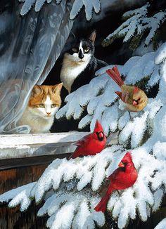 357 Best Bird Watching Images Cat Art Cats Art