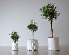Pot that grows with the plant.