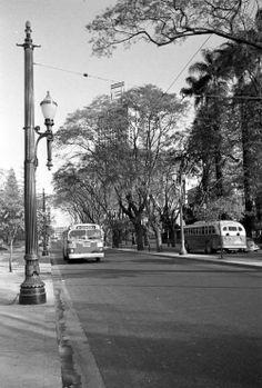 """RUA SÃO LUÍS - 1954 - Antes de se chamar """"rua de São Luís"""", esse lugar já teve o nome de Beco Comprido. """"São Luís"""" é uma homenagem ao santo de devoção do Brigadeiro Luís Antônio que fez fortuna trabalhando como tropeiro. Sua chácara ficava entre a rua Sete de Abril (antiga rua da Palha) e a praça da República (antigo largo dos Curros). No interior dessa chácara, foi aberta uma trilha que, mais tarde se transformaria na atual avenida."""