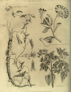 1 - The Universal herbal; or, Botanical, medical, and agricultural dictionary; - Biodiversity Heritage Library