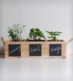 plantas aromaticas en la cocina