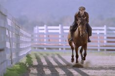 """Fourteen horses played Joey during the film version of War Horse. The """"main"""" acting horse in the film, Finder, also portrayed Seabiscuit in the movie about the famous racehorse."""