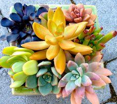 Succulent plant in Modern Minimalist glazed pot by WoogiesPlace