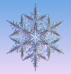 snowflakes under the microscope | Snowflakes under the microscope