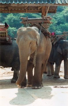 Elephant rides in Thailand!