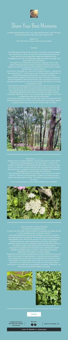 Medicinal Plants, Natural Medicine, Clinic, In This Moment, Nature, Naturaleza, Healing Herbs, Natural Home Remedies, Nature Illustration