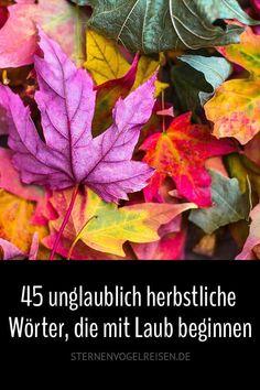 Was wäre der Herbst ohne buntfarbiges Laub? Was dem einen lästig ist und Arbeit bringt, ist für den anderen ein spaßfroher Segen. Ein Laubspaziergang weckt die Sinne auf. Da ist es ganz egal, ob die Sonne scheint oder es nebelt. Ist beides schön, wenn man die richtige Jacke trägt. Und kommt endlich Wind auf, machen die alten Blätter nochmal Furore. #herbst #laub #blätter