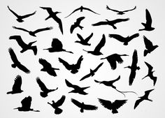 Black Flying Bird Silhouettes Vector (Free) | Free Vector Archive