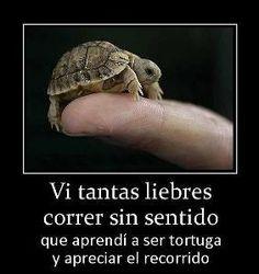 vi tantas liebres correr sin sentido que aprendi a ser tortuga y apreciar el recorrido