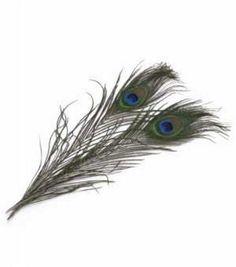 Zucker Feather Peacock Feathers