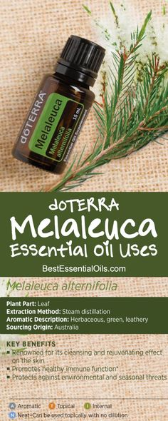 doTERRA Melaleuca Essential Oil Uses