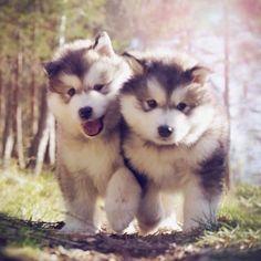 Cuties..