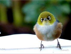 Bird wallpaper, Little birds and Search on Pinterest