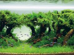 How to Begin Aquascaping in your Aquarium #AquariumTanksIdeas