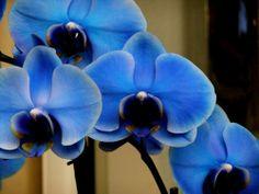 Hybridy druhu vanda jsou velmi krásné a oblíbené. Jediná nečeská rostlina na zdi.