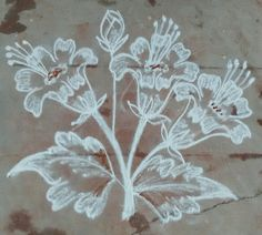 Learn To Sketch, Flower Rangoli, Beautiful Rangoli Designs, Simple Rangoli, Pencil Drawings, Creative, Flowers, Rocks, Free