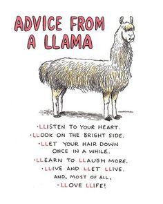 Funny Llama Print Humorous Decor Alpaca by DrawnFromMyBrain