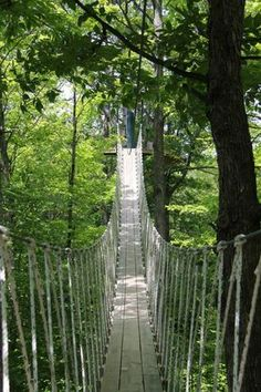 This Canopy Walk In Boyne City Michigan Will Make Your Stomach Drop Michigan Vacations, Michigan Travel, Camping Michigan, Michigan Day Trips, Michigan Facts, Midwest Vacations, Places To Travel, Places To See, Travel Destinations