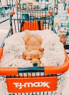 Super Cute Puppies, Baby Animals Super Cute, Cute Baby Dogs, Cute Little Puppies, Cute Funny Dogs, Cute Little Animals, Cute Funny Animals, Cute Puppy Pics, Baby Farm Animals
