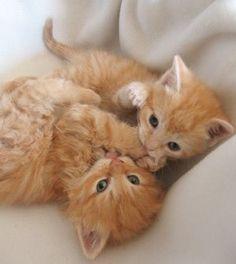 Cute Kittens. Meow!