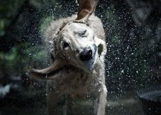 One of the best things to teach your dog is when and when not to shake off! All Dogs, Best Dogs, Dogs And Puppies, Doggies, Dog Shaking, Dog Rules, Mans Best Friend, Dog Life, Animal Photography