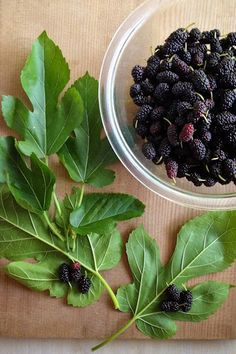 I really want to try some of these recipes with the the big mulberry tree in my backyard! Mulberry Fruit, Mulberry Tree, Fruit And Veg, Fruits And Veggies, Vegetables, Clean Eating Recipes, Healthy Eating, Healthy Recipes, Mulberry Recipes
