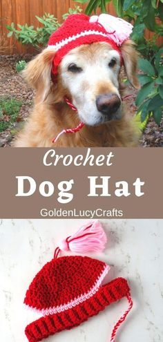 How to crochet hat for a dog, free crochet pattern, DIY dog accessory, crochet for pets Crochet Dog Hat Free Pattern, Crochet Patterns Amigurumi, Free Crochet, Crochet Pet, Crochet Animals, Crochet Dog Clothes, Crochet Mitts, Crochet Accessories, Diy Dog