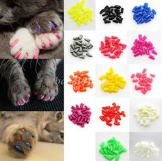 20Pcs Soft Pet Nail Caps Dog Claw Cat Paw Control Avoid Scratch+Adhesive Glue   eBay Kitten Baby, Baby Kittens, Cats And Kittens, Cats Bus, Beautiful Kittens, Cute Kittens, Cat Nail Caps, Pet Dogs, Dog Cat