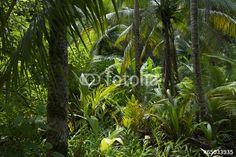 Bujné tropické džungle Rainforest Pozadí - Plakát, Obraz na zeď | Posters.cz