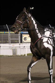 Harness Racing's Spookiest Horse? | Standardbred Canada