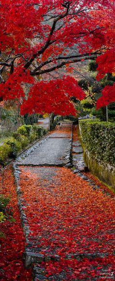 Philosopher's Path - Kyoto, Japan