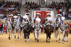 Bullfighting on horseback - Royal Parade on the Arena, Portugal