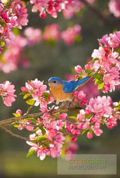 birds and blooms - Google Search
