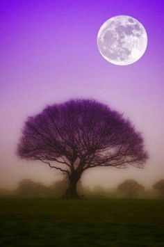 What a beautiful photo! Light purple sky and dark purple shadowed tree during a full moon. Or, has the photo been altered? Stars Night, Good Night Moon, Beautiful Moon, Beautiful World, Foto Nature, Shoot The Moon, Moon Pictures, Full Moon, 3 Moon