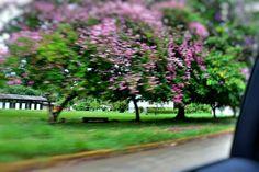 Gamboa 16 de maio de 2015