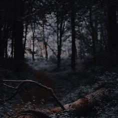 Queen Aesthetic, Nature Aesthetic, Book Aesthetic, Character Aesthetic, Aesthetic Pictures, Dark Queen, A Discovery Of Witches, A Series Of Unfortunate Events, Dark Photography