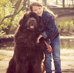 Hey Kids! Want to Meet My Big Dogs? Here Are 7 Rules. (Great rules for dogs of ALL sizes)