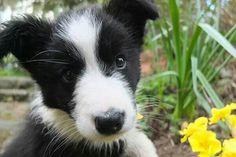 Garden buddy!