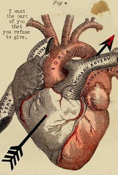 Give just a little and get the universe in return marcus by loui jover Illustrations, Illustration Art, Tumblr Tattoo, Medical Art, Vintage Medical, Anatomical Heart, Human Heart, Heart Art, Cat Lovers