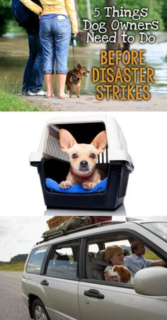 5 Things Dog Owners Need To Do Before Disaster Strikes | eBay