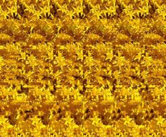FLOWER, 3-D Stereograms - Brought to you by eyetricks.com.