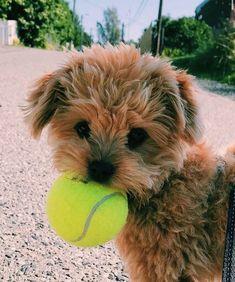 Super Cute Puppies, Baby Animals Super Cute, Cute Baby Dogs, Cute Little Puppies, Cute Dogs And Puppies, Cute Little Animals, Cute Funny Animals, Doggies, Cute Pups