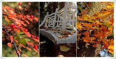 Herbst  #Herbst #November #EssenReisenLeben