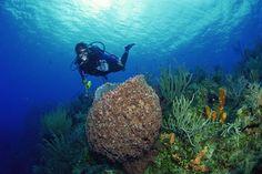 """lugares_turisticos_de_Mexico_arrecife"""