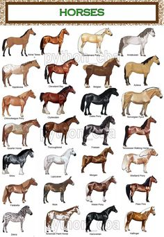 collection 3 posters breeds of horses – cm. – new - HORSE Pretty Horses, Horse Love, Beautiful Horses, Animals Beautiful, Cute Animals, Horse Pictures, Animal Pictures, Horse Color Chart, Horse Coat Colors